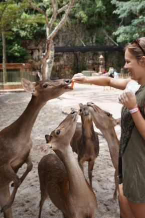 Visit Lost World of Tambun and see tons of animals