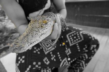 Crocodile Adventureland, Langkawi