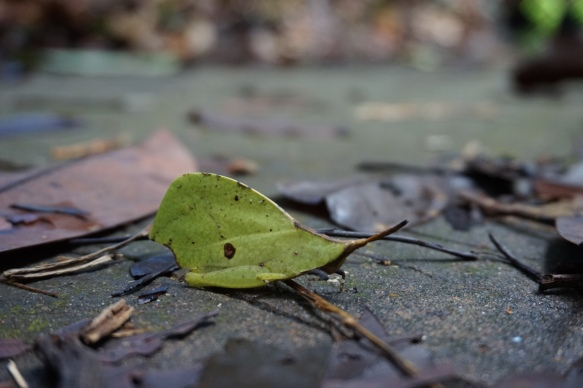Katydid. A bug that looks like a leaf! Really amazing if you can find one!
